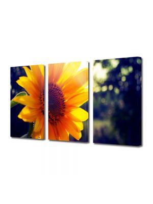 Set Tablouri Multicanvas 3 Piese Flori Soare puternic si floarea acestuia