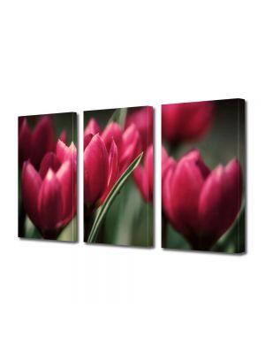 Set Tablouri Multicanvas 3 Piese Flori Lalele inflorite