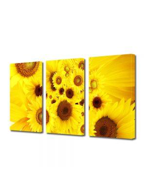 Set Tablouri Multicanvas 3 Piese Flori Pui de floarea soarelui