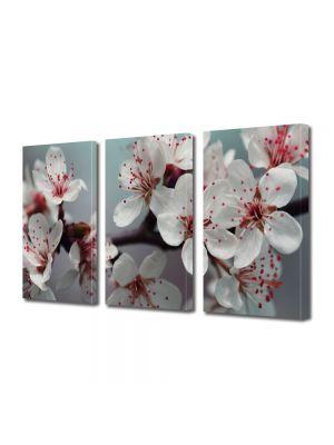 Set Tablouri Multicanvas 3 Piese Flori Flori de pom fructifer