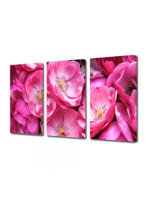 Set Tablouri Multicanvas 3 Piese Flori Trandafiri violet salbatici