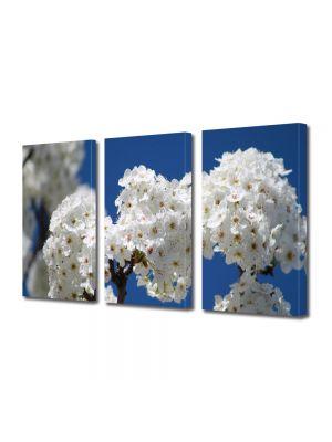 Set Tablouri Multicanvas 3 Piese Flori Flori albe de pom