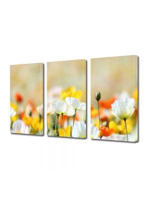 Set Tablouri Multicanvas 3 Piese Flori Flori frumos colorate