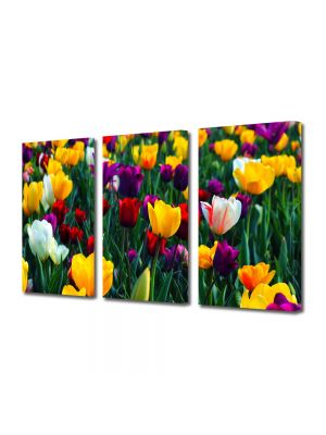 Set Tablouri Multicanvas 3 Piese Flori Paleta de culori