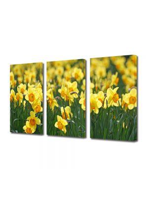 Set Tablouri Multicanvas 3 Piese Flori Narcise galbuie