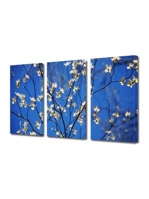Set Tablouri Multicanvas 3 Piese Flori Crenguta cu flori albe