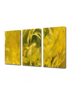 Set Tablouri Multicanvas 3 Piese Flori Floare batuta