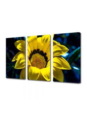 Set Tablouri Multicanvas 3 Piese Flori Petale fine