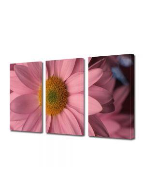 Set Tablouri Multicanvas 3 Piese Flori Flori cu petale roz pal