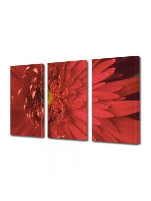 Set Tablouri Multicanvas 3 Piese Flori Floare cu nuante speciale