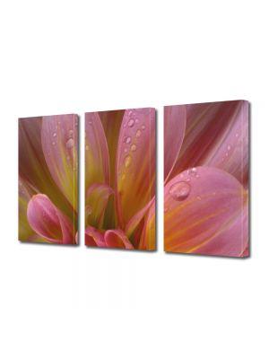 Set Tablouri Multicanvas 3 Piese Flori Petale si roua