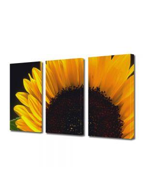 Set Tablouri Multicanvas 3 Piese Flori Floare pe camp