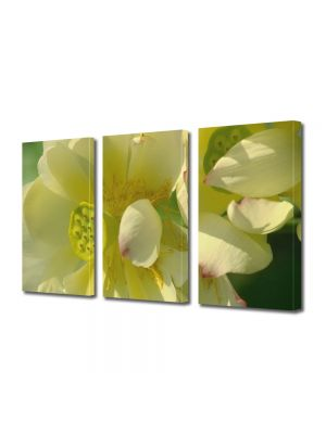 Set Tablouri Multicanvas 3 Piese Flori Flori firave