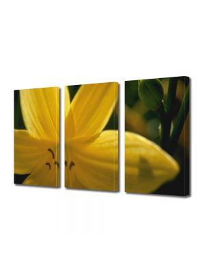 Set Tablouri Multicanvas 3 Piese Flori Floare galbena