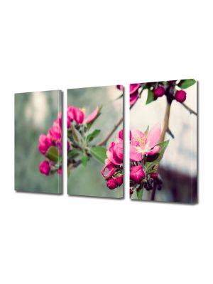 Set Tablouri Multicanvas 3 Piese Flori Frumusetea naturii
