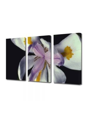 Set Tablouri Multicanvas 3 Piese Flori Floare cu trei petale