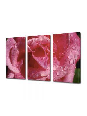 Set Tablouri Multicanvas 3 Piese Flori Floare dupa averse