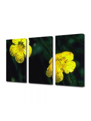 Set Tablouri Multicanvas 3 Piese Flori Doua floricele galbene