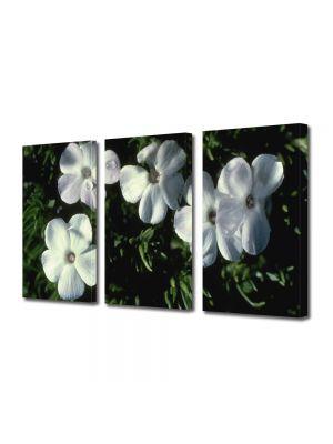 Set Tablouri Multicanvas 3 Piese Flori Cinci flori albe ca neaua