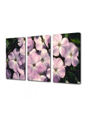 Set Tablouri Multicanvas 3 Piese Flori Familie mare