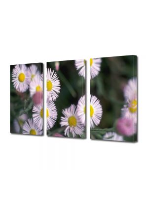 Set Tablouri Multicanvas 3 Piese Flori Flori de vara