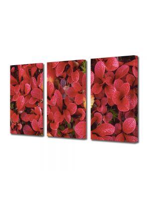 Set Tablouri Multicanvas 3 Piese Flori Petale rosii