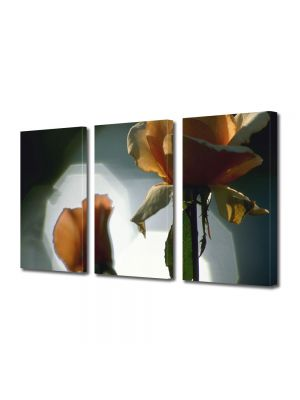 Set Tablouri Multicanvas 3 Piese Flori Sedinta foto