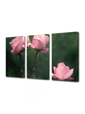 Set Tablouri Multicanvas 3 Piese Flori Roz