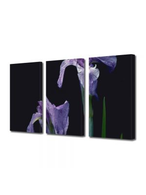 Set Tablouri Multicanvas 3 Piese Flori Doua violet
