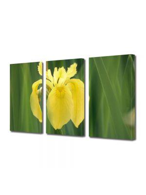 Set Tablouri Multicanvas 3 Piese Flori Galben