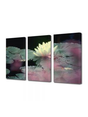Set Tablouri Multicanvas 3 Piese Flori Floare alba de nufar