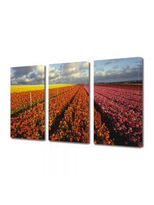 Set Tablouri Multicanvas 3 Piese Flori Camp imens de flori