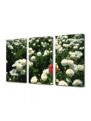 Set Tablouri Multicanvas 3 Piese Flori Unic