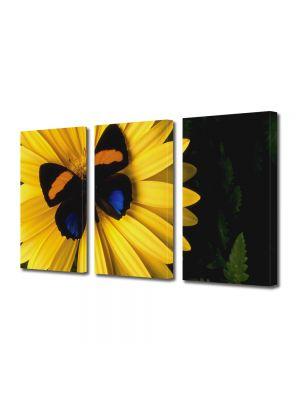 Set Tablouri Multicanvas 3 Piese Flori Fluture pe floare