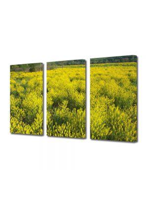 Set Tablouri Multicanvas 3 Piese Flori Pe camp