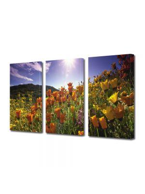 Set Tablouri Multicanvas 3 Piese Flori Soare puternic