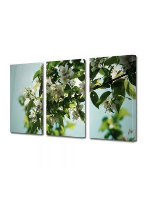 Set Tablouri Multicanvas 3 Piese Flori Flori albe pe crenguta
