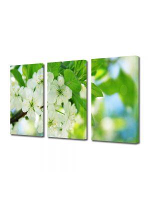Set Tablouri Multicanvas 3 Piese Flori Flori la lumina soarelui
