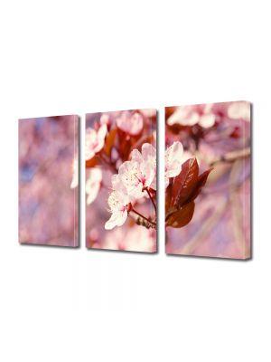 Set Tablouri Multicanvas 3 Piese Flori Proaspat inflorit