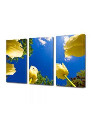 Set Tablouri Multicanvas 3 Piese Flori Lalele spre cer
