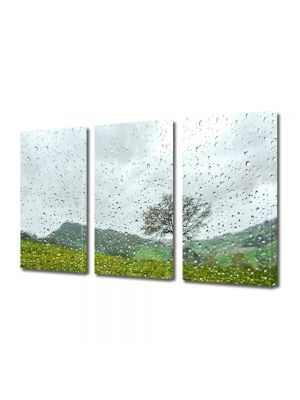 Set Tablouri Multicanvas 3 Piese Flori Dupa ploaie