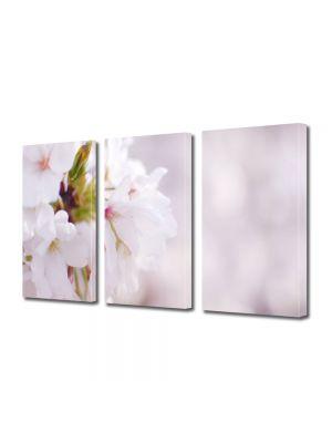 Set Tablouri Multicanvas 3 Piese Flori Flori