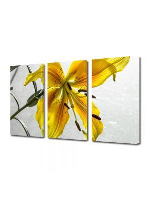 Set Tablouri Multicanvas 3 Piese Flori Liliac galbui