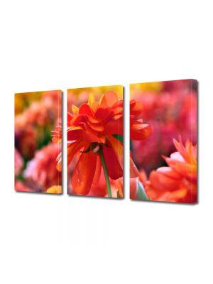 Set Tablouri Multicanvas 3 Piese Flori Nuante de rosu