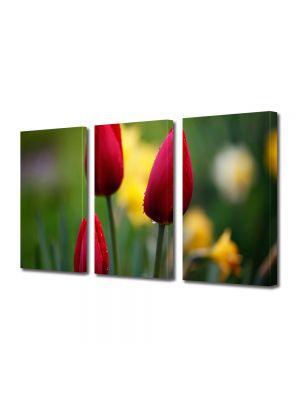 Set Tablouri Multicanvas 3 Piese Flori Trei lalele frumoase