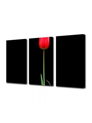 Set Tablouri Multicanvas 3 Piese Flori Fir de lalea rosie