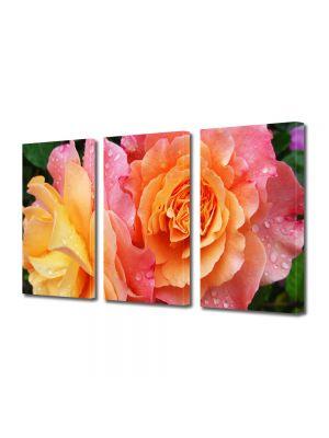 Set Tablouri Multicanvas 3 Piese Flori Trandafiri in gradina