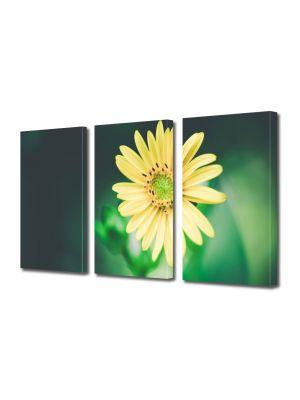Set Tablouri Multicanvas 3 Piese Flori Floricica galbena