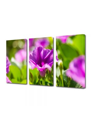 Set Tablouri Multicanvas 3 Piese Flori Violet strident