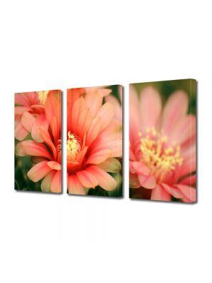 Set Tablouri Multicanvas 3 Piese Flori Flori de cactus